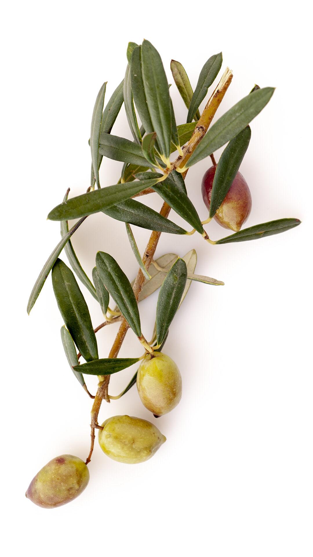 XTH - 6 Bt.Olio Ex.Athinolia L 0,500